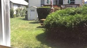 bunny rabbit outside tiny house in backyard brian coyne youtube