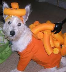 Pet Halloween Costumes Dogs 153 Dog Costume Central Images Pet Costumes