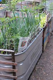 galvanized water trough planters u2022 nifty homestead