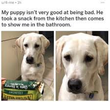 Puppy Memes - the funniest puppy memes january 2018 memes co