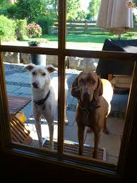 Glass Door Stops by How To Stop Your Dog From Jumping At Glass Doors Pets4homes