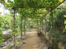 Vine Trellis Ideas Awesome Picture Of How To Build A Grape Arbor Pergola Perfect