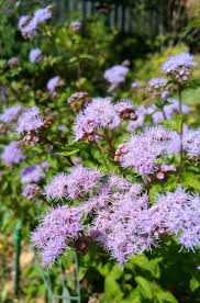 native ohio plants 18 best florida wildflowers images on pinterest wildflowers