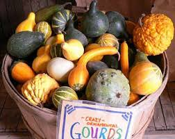ornamental gourds etsy