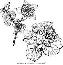 Flowers Designs For Drawing Climbing Rose Flowers Drawing Sketch Lineart Stock Vector