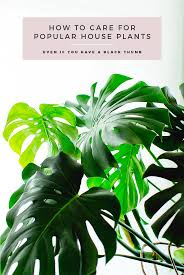 tips u0026 tricks for caring for popular indoor plants from monstera