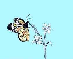 art every day number 141 illustration drawing butterfly and