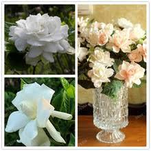 Indoor Fragrant Plants - fragrant indoor plants promotion shop for promotional fragrant