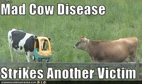 Funny Cow Memes - mad cow disease jpg