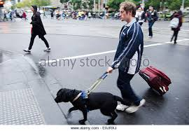 Blind Dog And His Guide Dog Blind Man Guide Dog Stock Photos U0026 Blind Man Guide Dog Stock