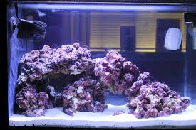 Fluval Sea Marine And Reef Led Strip Lights by Fluval On Tapatalk Trending Discussions About Your Interests