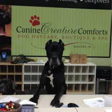 Creature Comforts Pet Sitting Canine Creature Comforts 11 Photos U0026 10 Reviews Pet Sitting