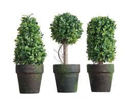 s 3 topiary trees live boho