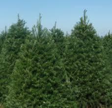 purdy tree farms home facebook
