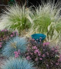 colorado springs xeriscape garden mediterranean landscape