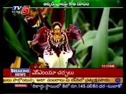 monkey flowers monkey flowers tv5