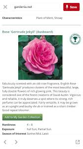 climbing rose gardening forum gardenersworld com