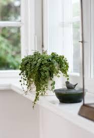 4 plants that don u0027t need sunlight rl