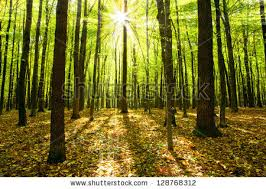 autumn forest trees nature green wood stock photo 128768312