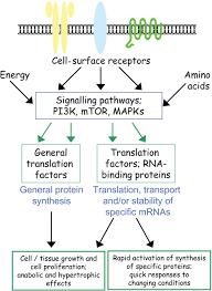 Signalling Translation Signal Transduction Pathways