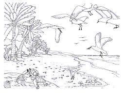 coastal adult coloring book Google Search