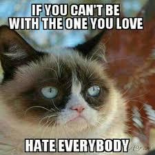 Tard The Grumpy Cat Meme - 585 best tard the grumpy cat images on pinterest funny stuff