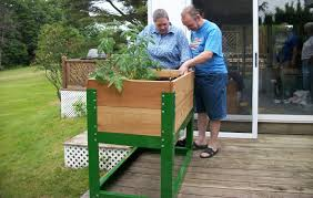 raised garden beds a growing trend disabled world