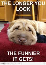 Dog Smiling Meme - 35 funny smile meme images and photos that will make you laugh