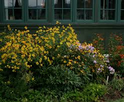 native new england plants new england habitat gardening blog