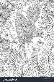 hand drawn parrot coloring page stock vector 500407711 shutterstock
