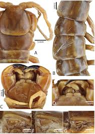 resultat cap cuisine 2012 a taxonomic review of the centipede genus scolopendra linnaeus 1758