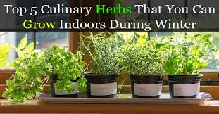Herb Garden Winter - herbs jpg