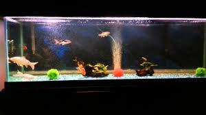 koi fish tank youtube