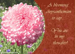 you are in my thoughts free november flowers ecards greeting