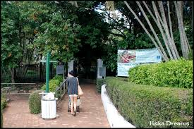 Brisbane Botanic Gardens Mount Coot Tha by Iliska Dreams Tourist In My Own City Brisbane Botanical Gardens