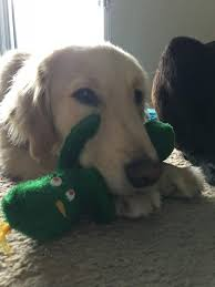 gumby halloween doggy daddy dresses up as favorite toy and dog goes nuts