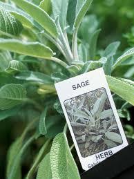 Kitchen Herb Garden Design How To Plant A Kitchen Herb Garden Hgtv