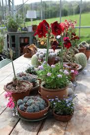 Window Planters Indoor by 225 Best Container Garden Love Images On Pinterest Plants Pots