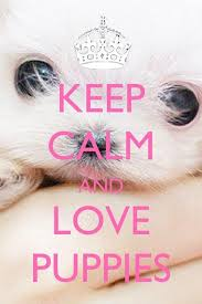 24 best keep calm signs images on addiction clam and
