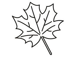 maple leaf coloring page itgod me