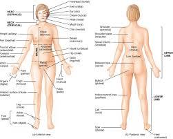 Anatomy Of Human Body Pdf Human Anatomy Names Of Body Parts Human Body Parts Names In Hindi