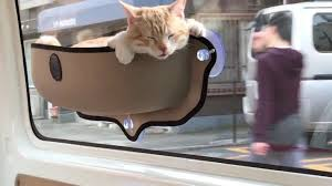 cat travels in car sitting in pocket youtube