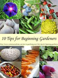 Raised Gardens For Beginners - how to start a garden u2013 10 steps to gardening for beginners