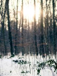 best 25 winter tickets ideas on halstatt