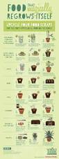 Easy Herbs To Grow Inside Be Sure To Upcycle Your Food Scraps All Of This Food Will