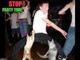 Meme Party Hard - party hard cat memes imgflip