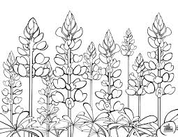 texas bluebonnets coloring sheet