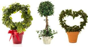 Topiary Plants Online - unbelievable can u guess the plant used in crafting these
