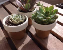 Flower Pot Wedding Favors - plant wedding favor etsy
