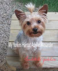 my yorkie gets first haircut youtube